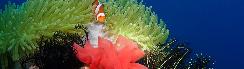 Scuba Diving at Wellbeach