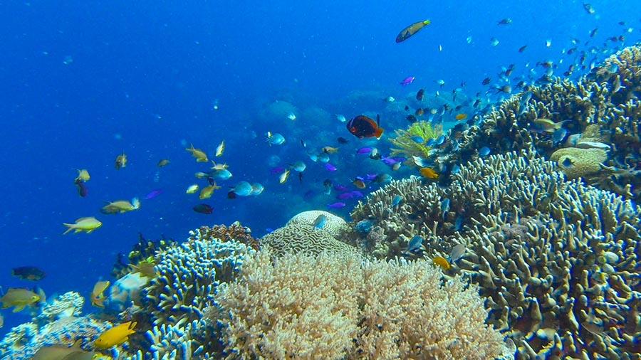 Apo Island - Chapel Dive Site