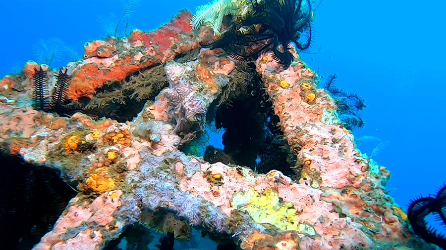 Scuba Diving - Ginama Point