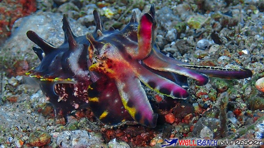 Scuba Diving in Siaton